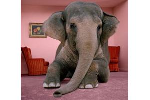 elephant-300x200